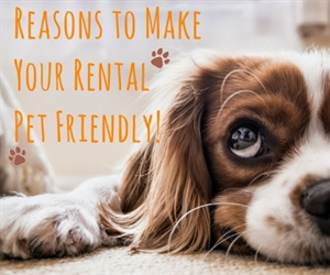 GOOD REASONS TO CONSIDER RENTING TO A PET OWNER