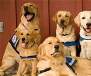Assistance Animals- What Landlords must know!