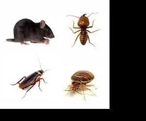 How to spot pests and rodents in a property