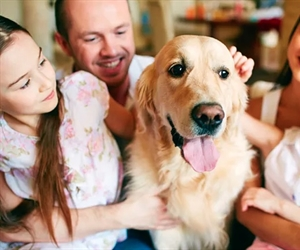 Pets in properties: What you need to know
